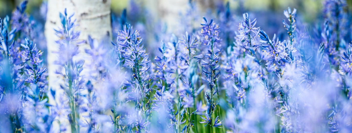 Meta Slider - HTML Overlay - Meta Slider - HTML Overlay - blue meadow flowers_scaled_rnd2