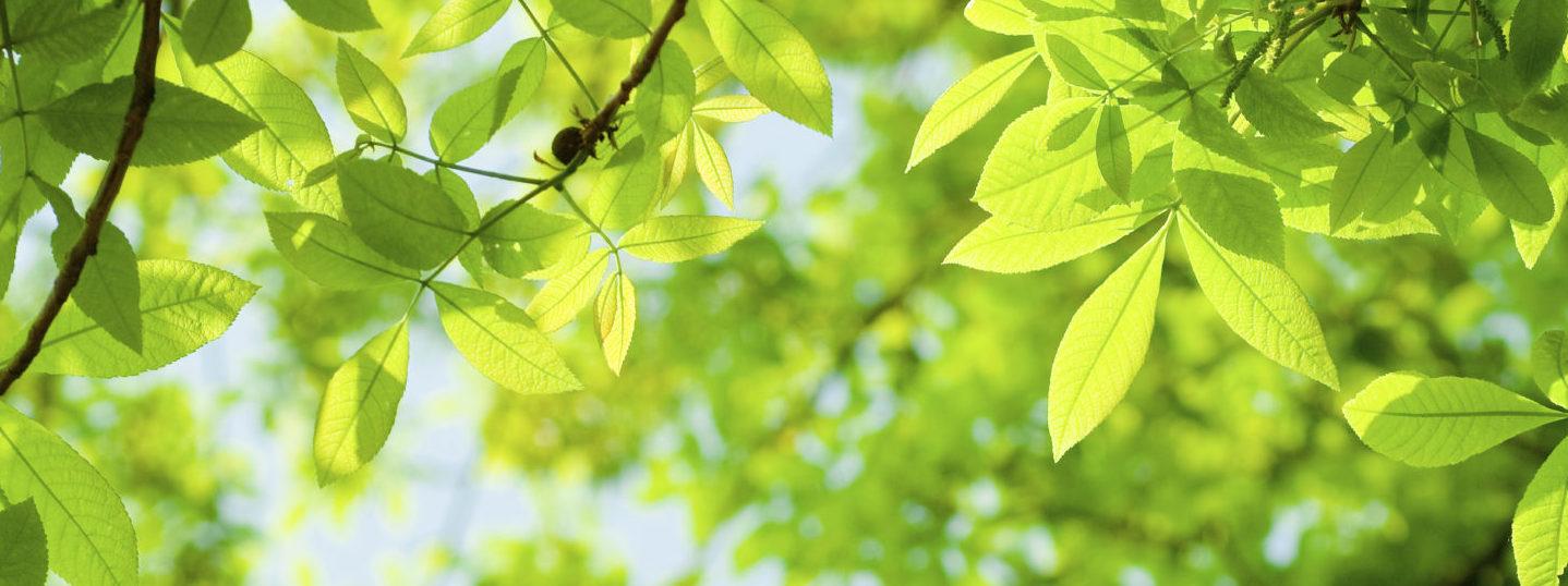iStock_000009848577Medium_spring leaves